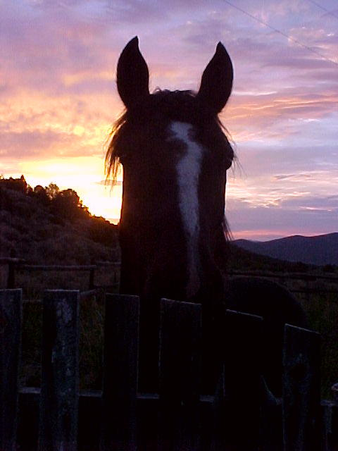 Mijo at Sunset